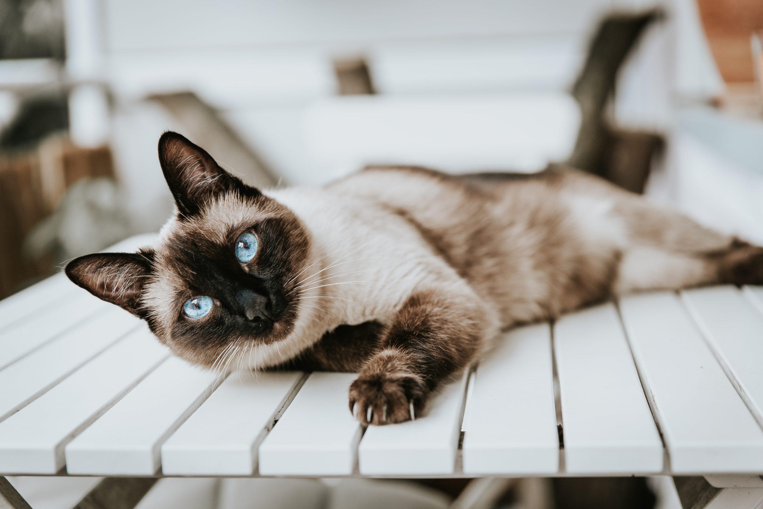 Wie die Tierkommunikation funktioniert | Seelenkater | Tamara Schenk